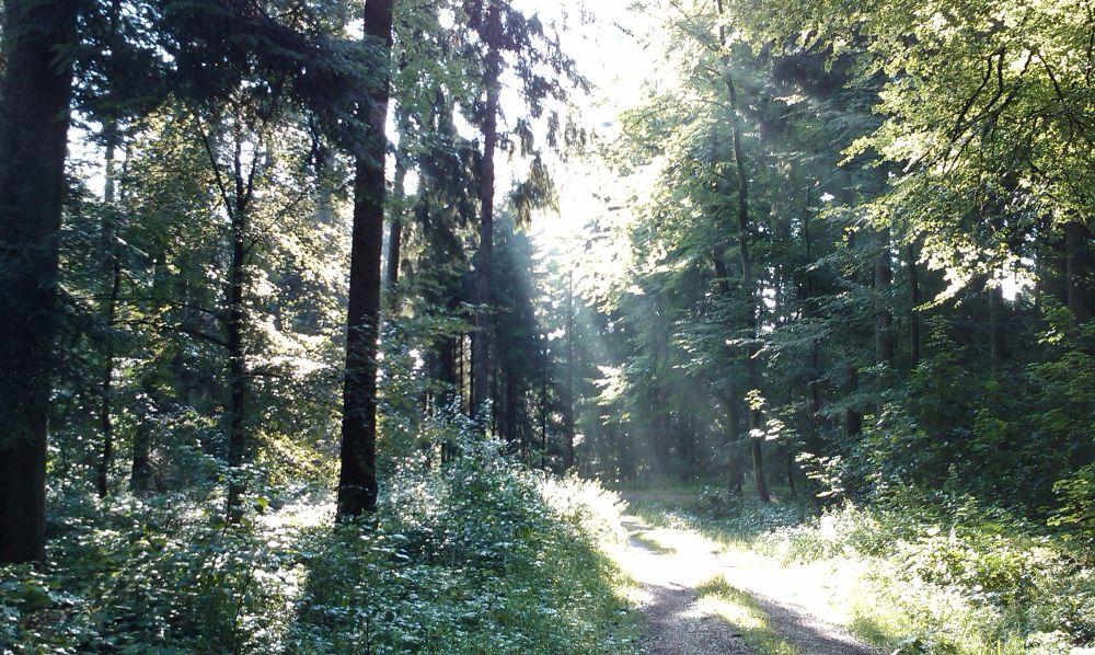 Koppenland Schalmenweg