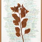 Pflanze, getrocknet und Buntstifte auf Papier,69 x 49 cm