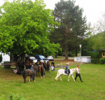 Grafik aus der Ferne auf Wiese - mehrere Kinder beim Ponyreiten,  Zuschauer stehen unter einem großen Baum