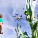 Pilot steuert eine Drohne über einem Maisfeld